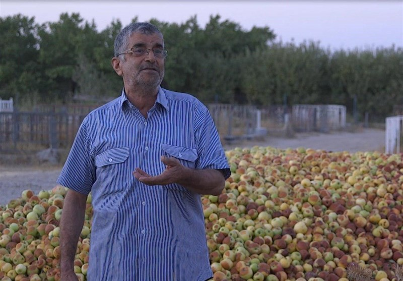 روایت «میوههای روی درخت» از مشکلات کشاورزی
