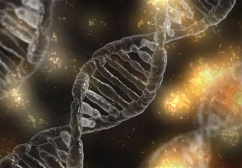 New Genes Found Responsible for Regulating Muscle Cells