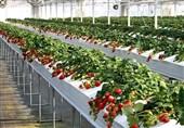 افتتاح نخستین گلخانه هیدروپونیک در ازنا؛ 60 میلیارد تومان پروژه عمرانی و اقتصادی به بهرهبرداری رسید