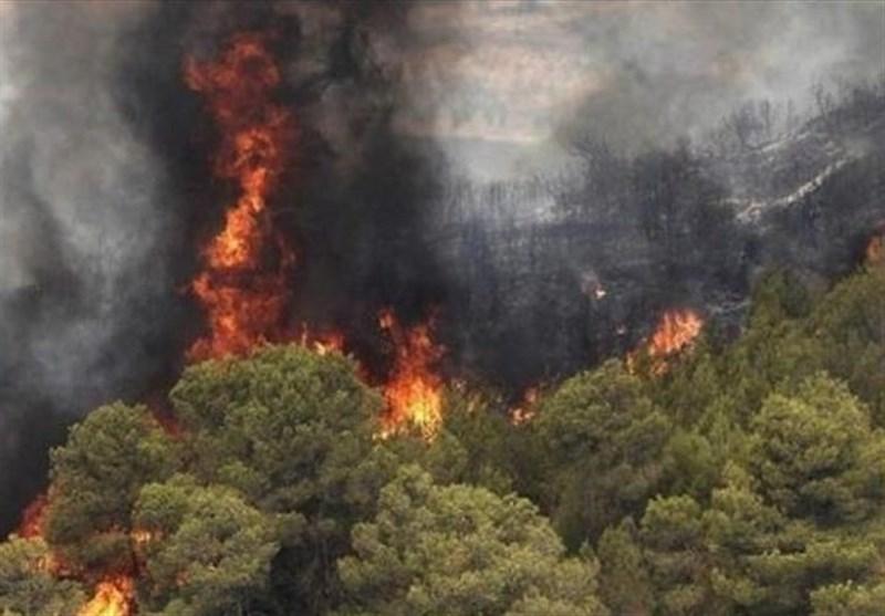 آتش سوزی در جنگلهای «ارس» مهار شد