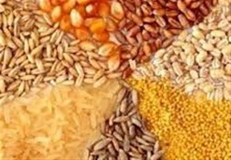 نایب رئیس کمیسیون کشاورزی مجلس: دولت نباید در واردات نهادههای دامی دخالت کند