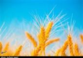 «کشاورزی»، ناجی اقتصاد|1.5 میلیارد دلار صرفهجویی ارزی با اجرای یک دستور رهبری