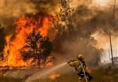 هشدار هواشناسی در زمینه برخورد «رعد و برق » در کهگیلویه و بویراحمد؛ خطر آتش سوزی جنگلها را تهدید میکند