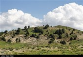 3400 هکتار از اراضی یزد بیابان زدایی شد