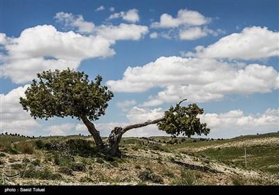 خراسان شمالی با داشتن بیش از 410 هزار هکتارجنگل ارس،یکی از ذخیره گاه های این میراث طبیعی کشور محسوب میشود