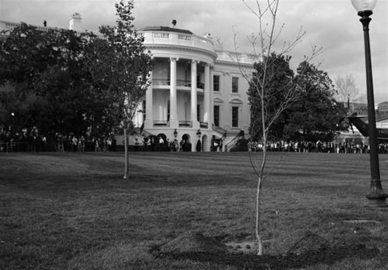 Oak Tree Symbolizing France-US Friendship Dies