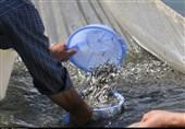گیلان  83 هزار بچه ماهی گرمآبی امسال در تالاب انزلی رهاسازی شد