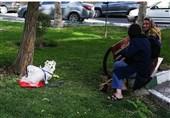 دادستان استان البرز: برخورد با سگگردانی در کرج تشدید میشود