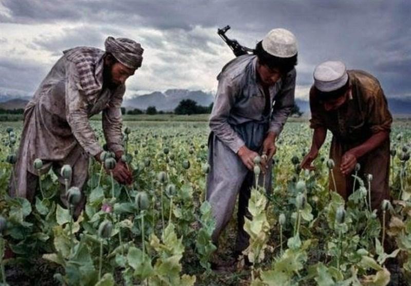 کشورهای عضو سازمان همکاری شانگهای، مرکز مبارزه با قاچاق مواد مخدر ایجاد میکنند