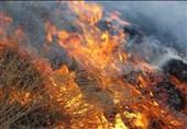 علت آتشسوزی مراتع و جنگلها مشخص شد