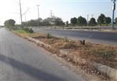 خوزستان  تار و مار درختان جاده کمربندی هندیجان؛ سونامی قطع درختان پایانی ندارد