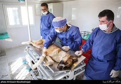 درمانگاه مرکز نگهداری سگهای ولگرد