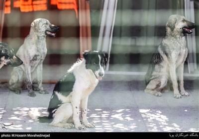 مرکز نگهداری سگهای ولگرد