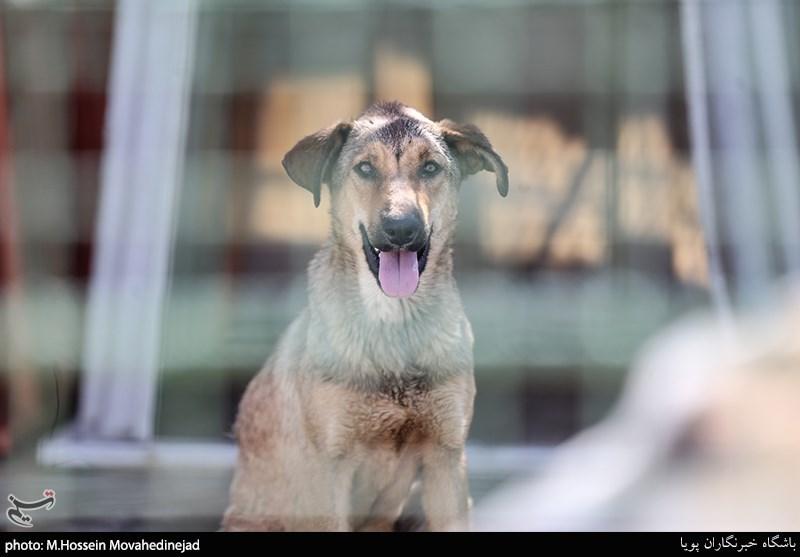 """هنوز بودجهای برای جمعآوری """"سگهای ولگرد"""" در کرمان اختصاص داده نشده است"""