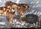 رفع نواقص نقاهتگاه سگهای بدون صاحب کهریزک تا 10 روز آینده