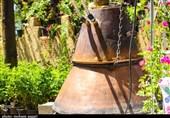 روایت تسنیم از تولید 45 محصول گیاهی توسط کارآفرین نطنزی