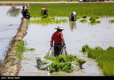 نشاء کاری در مبارکه اصفهان