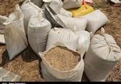 انتقاد از فعالیت دلالان در بازار خرید گندم در استان مرکزی؛ با قاچاق گندم به خارج از استان برخورد جدی میشود