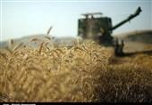 تاراج گندم چهارمحال و بختیاری به استانهای دیگر
