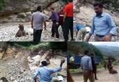 درخواست اشد مجازات برای ضاربان توله خرس سوادکوه + فیلم