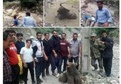 دو ضارب خرس سوادکوه روانه زندان شدند