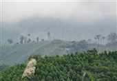 Action Needed to Save Asia-Pacific's Forests: UN