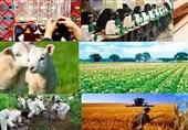 گروههای جهادی استان بوشهر طرحهای تولیدی و اشتغالزایی اجرا کردند