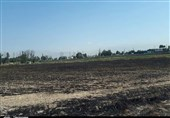 آتش سوزی مزارع دو کوهه رشنو پلدختر؛ 8 هکتار از دسترنج کشاورزان خاکستر شد