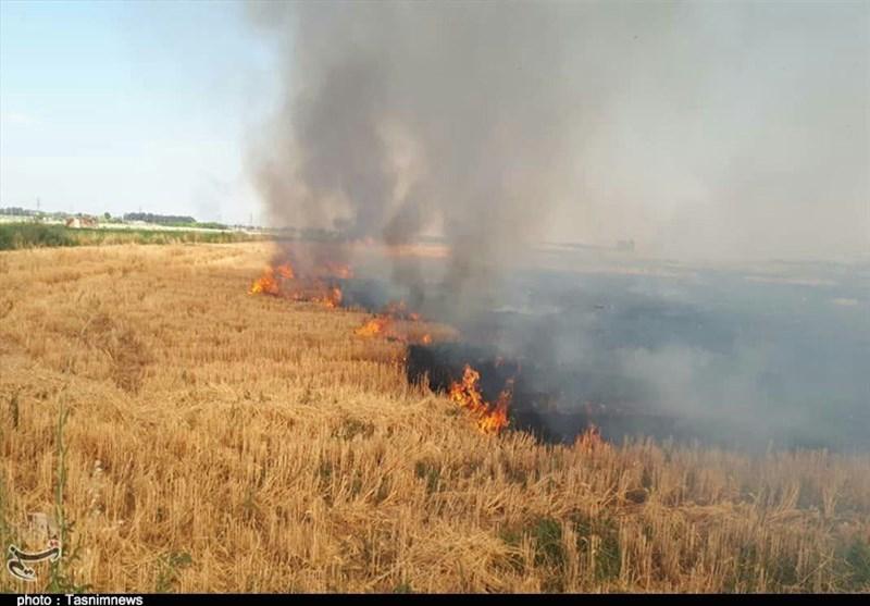 4 هکتار از مزارع «میش خاص» ایلام در آتش سوخت