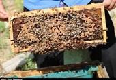 50 تن عسل طبیعی توسط مددجویان کمیته امداد استان کرمان تولید شد