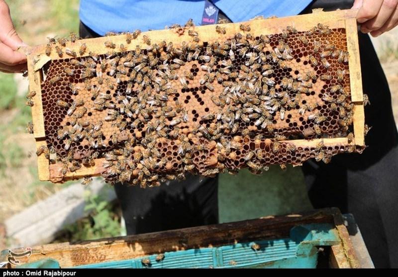 کندوهای هوشمند برای زنبورداری شهری