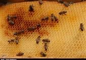 شهد عسل تقلبی در محور اردبیل-آستارا کشف شد