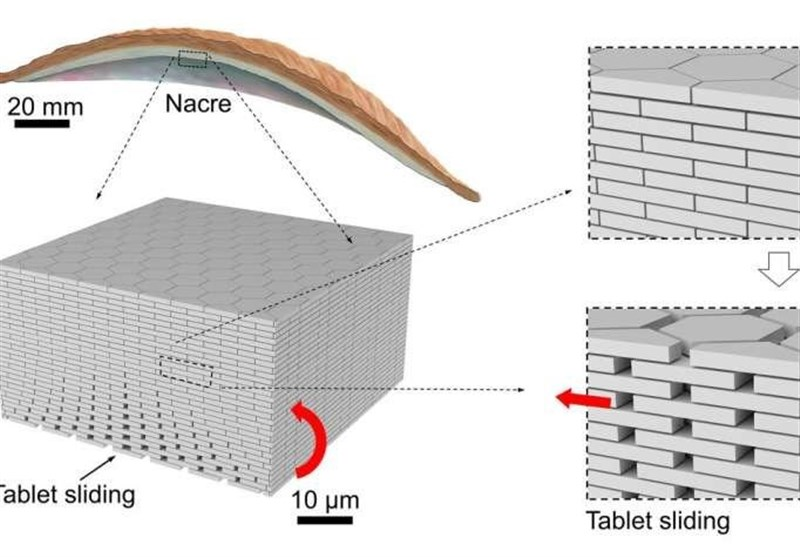 New Nature-Inspired Composite Glass More Resistant to Impacts