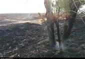 """بارش باران، پایانی بر عملیات اطفای حریق در ارتفاعات """" درازنو""""/ خسارت آتش به 200 هکتار از عرصههای جنگلی"""