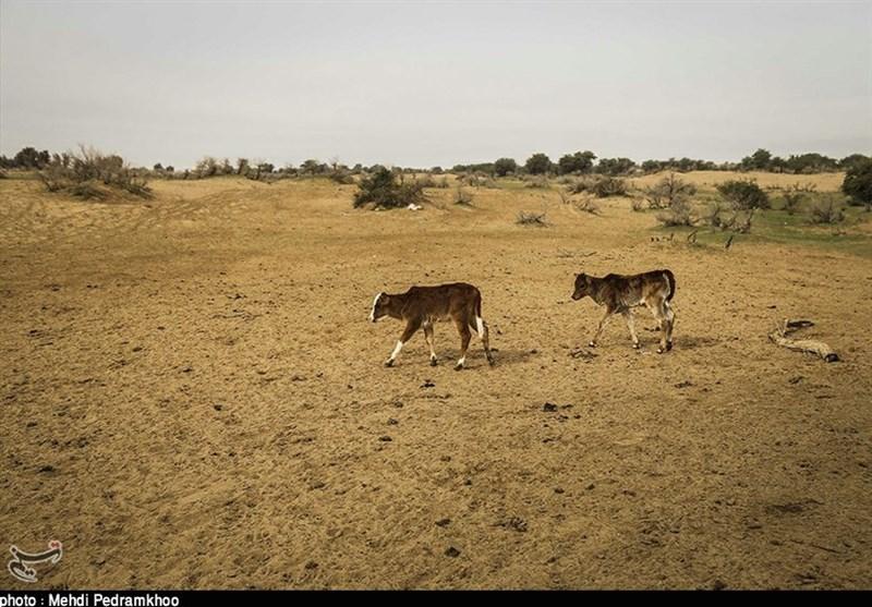بیابانزایی در کمین 300 هزار هکتار از مراتع و دیمزارهای استان گلستان است