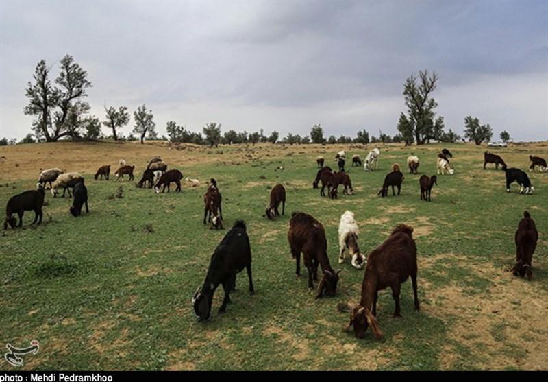 طبیعت بیابانی الهایی خوزستان به روایت تصویر