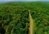 ثبت جهانی جنگلهای ایران چه ارزشی دارد؟