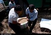 گفتگو| در واکنش به انتقال تنظیم بازار محصولات کشاورزی به وزارت صمت اعلام شد: « وای به حال کشاورزان»