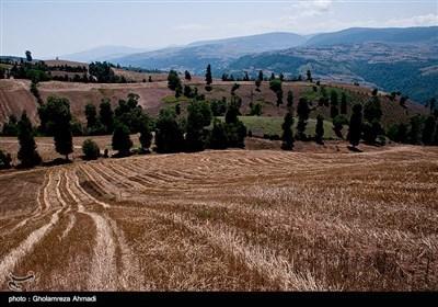 اکثریت ساکنین این روستا از اجداد کرد مهاجری هستند که این منطقه را برای زندگی انتخاب کرده اند و شغل اصلی آنها دامداری و کشاورزی است