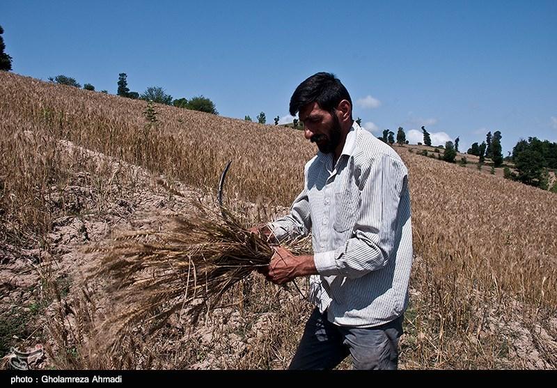 تکمیل طرحهای روستایی استان البرز بیش از 2 هزار شغل ایجاد کرد/ کاهش نرخ بیکاری در روستاهای استان