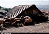 تعاونیها و تشکلهای بخش کشاورزی و روستایی یزد حمایت میشوند