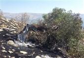 15 هزار هکتار از اراضی جنگلی و مرتعی کشور در آتش سوخت