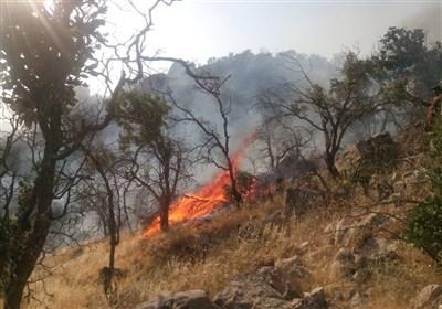 کهگیلویه و بویراحمد  بیداد آتش در « نیر»؛ بلوطهای هزار سالهای که ایستاده جان میدهند