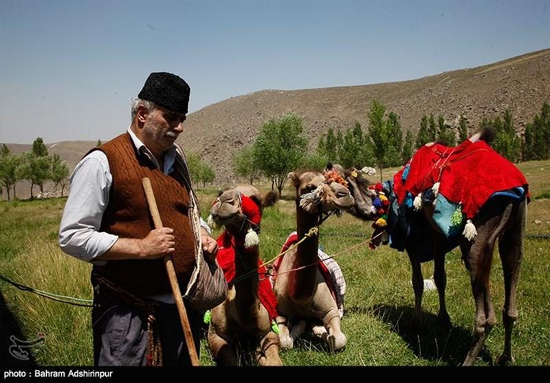 اردبیل| نخستین جشنواره توانمندیهای عشایر شهرستان مشکین شهر به روایت تصویر
