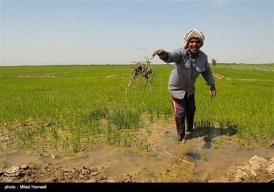 شغل اهالی روستای سیل زده ابوسینا کشاورزی است،آنها 1 ماه مانده به برداشت گندمزارهای خود،دچارسیل وآبگرفتگی شدند و روستایشان در آب محصور شد و زمینهای کشاورزی انها که بالای١� � هکتار بود به صورت کامل تخریب شد
