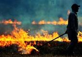 آتش زدن کاه و کلش در مزارع گندم نظرآباد + فیلم