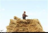 مطالبات گندم کاران امروز پرداخت میشود