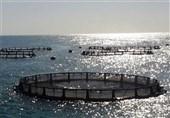توقف مزایده شرکت فرآوردههای شیلاتی بندرعباس در راستای حفظ حقوق عامه/ نخستین کارخانه کنسرو ماهی کشور با قیمت غیر واقعی فروخته نخواهد شد