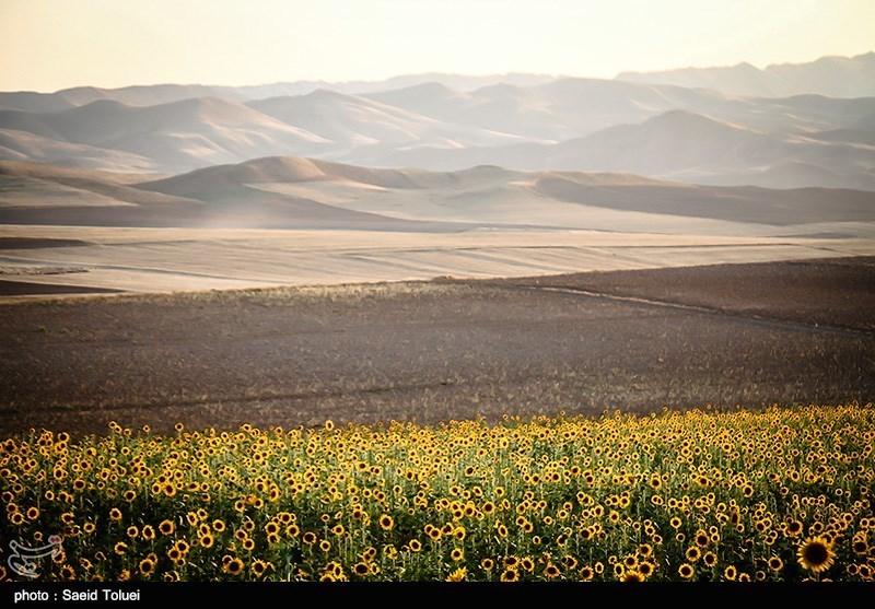 مصرف کمتر از سرانه کشوری کود شیمیایی در کرمانشاه؛ قطب کشاورزی کشور جایگاه واقعی خود را ندارد