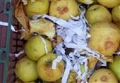 خطر فساد بیش از 40 هزار تن سیب در آذربایجانغربی